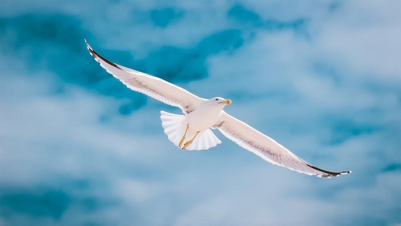 戻ら て と 言っ ない たら 羽ばたい