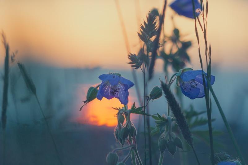 ヨルシカ 花 に 亡霊